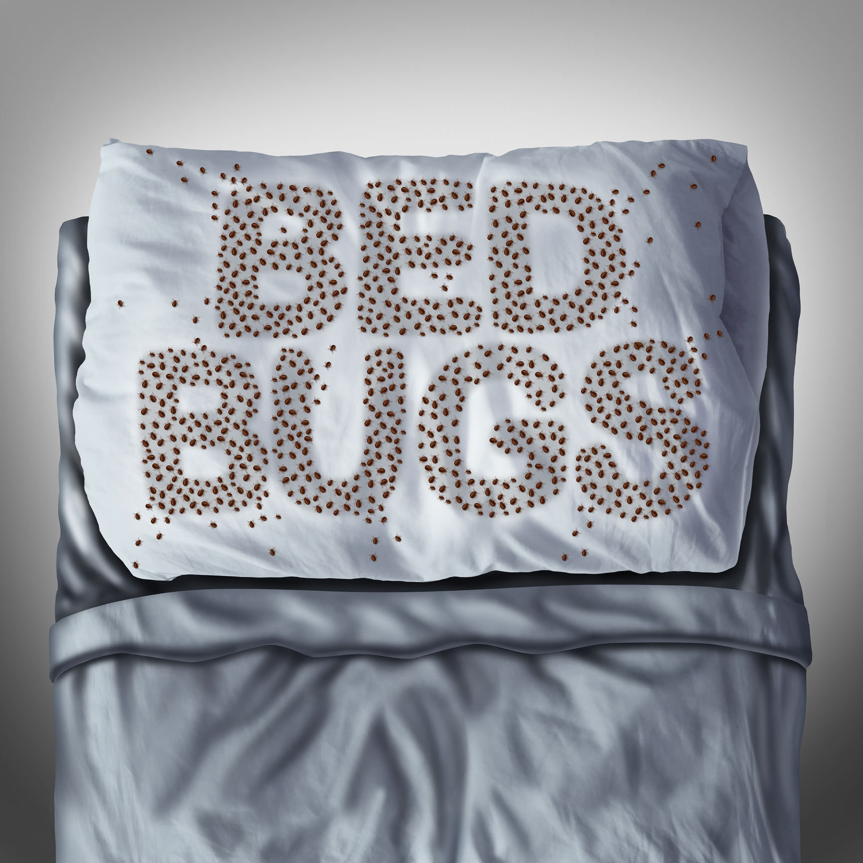 bed bugs on pillow